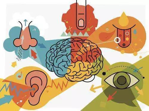 辨别色彩:成人用左脑 婴儿用右脑