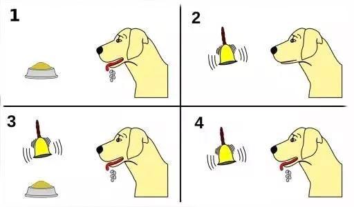 巴甫洛夫的狗的著名实验――学习就是把原本不相关的东西联系在一起的过程