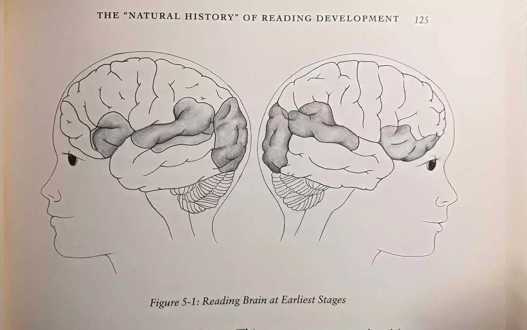 阅读新手的大脑-左右脑平衡激活