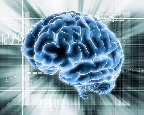 大脑不是越大越好