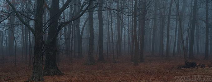 """""""消除音讀""""對我來說,簡直一片看不清方向的林子。"""