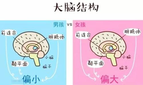 男女大脑结构的不同