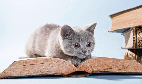 有诵读困难的人,智力同一般人并无差别,但阅读能力和写作能力却与常人有较大差距。